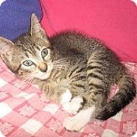 Adopt A Pet :: Zack - Shelton, WA