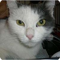 Adopt A Pet :: Bella - lake elsinore, CA