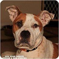 Adopt A Pet :: Justice - Rowlett, TX