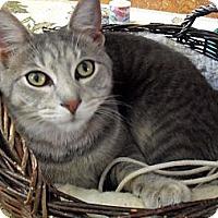 Adopt A Pet :: Frankie - Xenia, OH