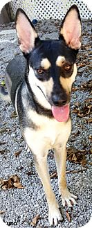 Shepherd (Unknown Type) Mix Dog for adoption in Key Largo, Florida - Luna