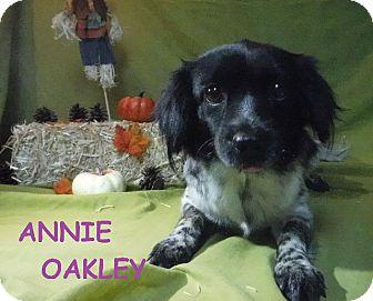 Australian Shepherd/Pekingese Mix Dog for adoption in Batesville, Arkansas - Annie Oakley