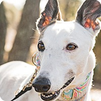 Adopt A Pet :: Sherry aka Cool Fine Wine - Gainesville, FL