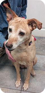 Mixed Breed (Medium) Mix Dog for adoption in King City, Ontario - Luka