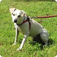 Adopt A Pet :: Wally - Alstead, NH