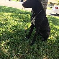 Adopt A Pet :: Keeva - Sacramento, CA