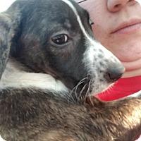 Adopt A Pet :: Elanore - Hainesville, IL