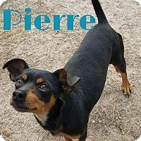 Adopt A Pet :: Pierre - Grand Rapids, MI