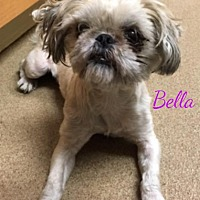 Adopt A Pet :: Jackson NJ - Bella - New Jersey, NJ