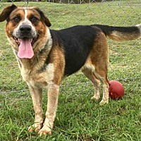 Adopt A Pet :: KELLIE - Augusta, GA