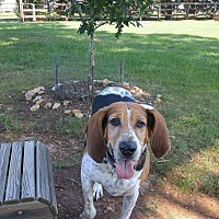 Adopt A Pet :: Julie - Pittsboro, NC