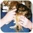 Photo 3 - Pomeranian Dog for adoption in Lexington, Missouri - Penny