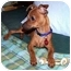 Photo 4 - Miniature Pinscher Mix Puppy for adoption in Inman, South Carolina - Coby