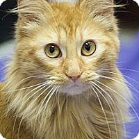 Adopt A Pet :: Susette - Chicago, IL