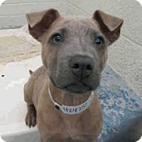 Adopt A Pet :: JoJo - Only $85 adoption fee! - Litchfield Park, AZ
