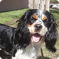 Adopt A Pet :: Keegan - Sugarland, TX