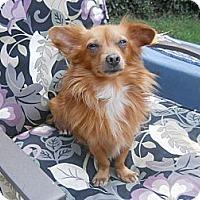 Adopt A Pet :: Joe - Charlotte, NC