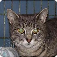 Adopt A Pet :: Isabelle - Jenkintown, PA