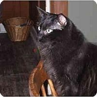 Adopt A Pet :: Jeremy - North Boston, NY
