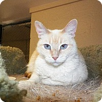 Adopt A Pet :: Katniss - Spring Valley, CA