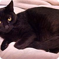 Adopt A Pet :: Button - Centralia, WA