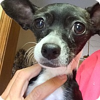 Adopt A Pet :: Poppy - Edmond, OK