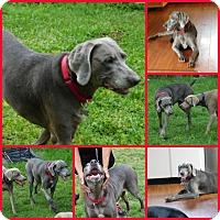 Adopt A Pet :: Allie - Inverness, FL