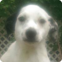 Adopt A Pet :: Paisley - Antioch, IL