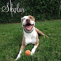 Adopt A Pet :: Skylar - Shelbyville, KY