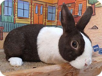 Dutch Mix for adoption in Foster, Rhode Island - Tulip