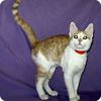 Adopt A Pet :: Frazier - Powell, OH