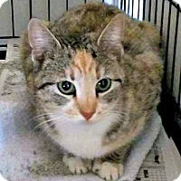Adopt A Pet :: Allana - Jefferson, NC