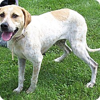 Adopt A Pet :: Olive - Metamora, IN