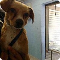 Adopt A Pet :: A506020 - San Bernardino, CA