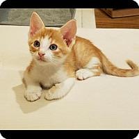 Adopt A Pet :: Gino - ROSENBERG, TX