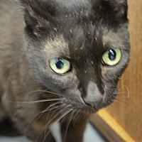 Adopt A Pet :: Holly Berry - Martinsville, IN