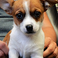 Adopt A Pet :: Dutchess - Long Beach, NY