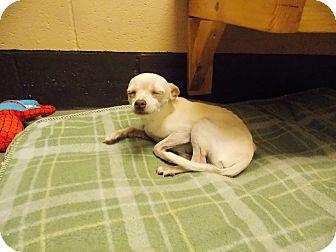 Chihuahua Dog for adoption in Villa Rica, Georgia - Dinky