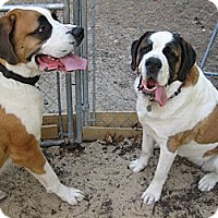Adopt A Pet :: MOLLY -- ADOPTION PENDING - Sudbury, MA