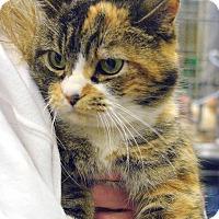 Adopt A Pet :: valentine - Pittstown, NJ