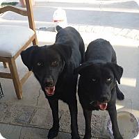 Adopt A Pet :: Mama - San Fernando Valley, CA