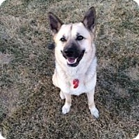 Adopt A Pet :: Shyla - Saskatoon, SK