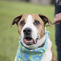 Adopt A Pet :: Tex - Kingwood, TX