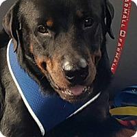 Adopt A Pet :: Wrangler - Frederick, PA