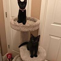 Adopt A Pet :: Teddy - Valrico, FL
