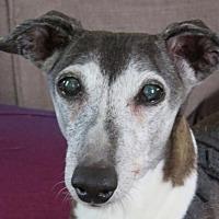 Adopt A Pet :: Mina - Westbury, NY