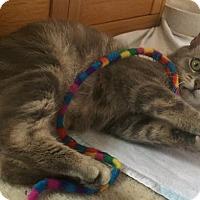 Adopt A Pet :: GRACE - Clayton, NJ