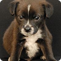 Adopt A Pet :: Orca - Newland, NC