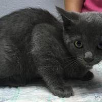 Adopt A Pet :: Mile - Green Bay, WI