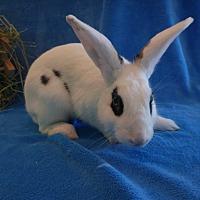 Adopt A Pet :: Archie - West Palm Beach, FL